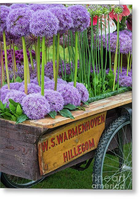 Allium Cart Greeting Card by Tim Gainey