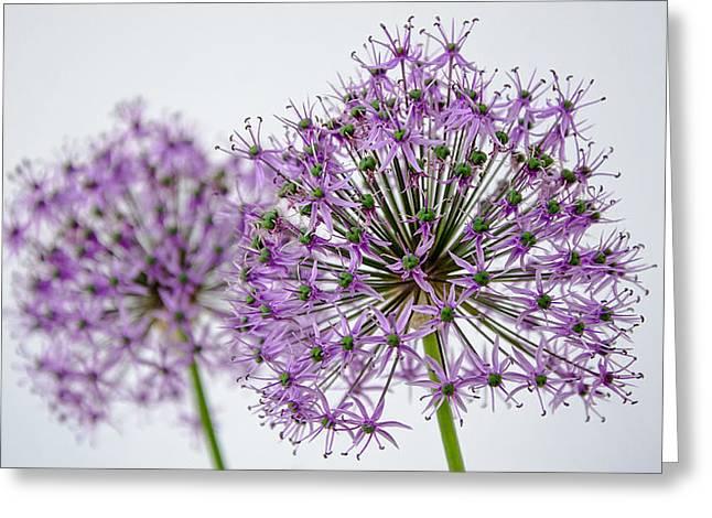 Pairs Greeting Cards - Allium Pair Greeting Card by Susan  McMenamin