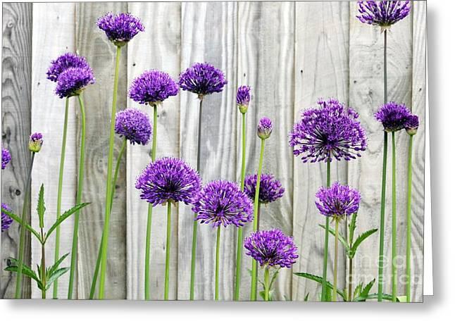 Purple Sensation Greeting Cards - Allium Purple Sensation Greeting Card by Anthony Cooper