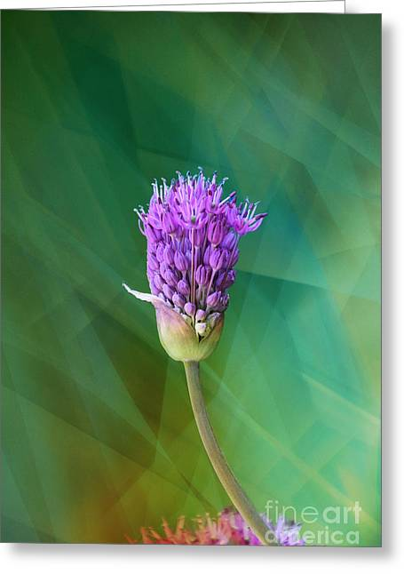 Burst Greeting Cards - Allium - Ready to Burst Greeting Card by Mary Machare