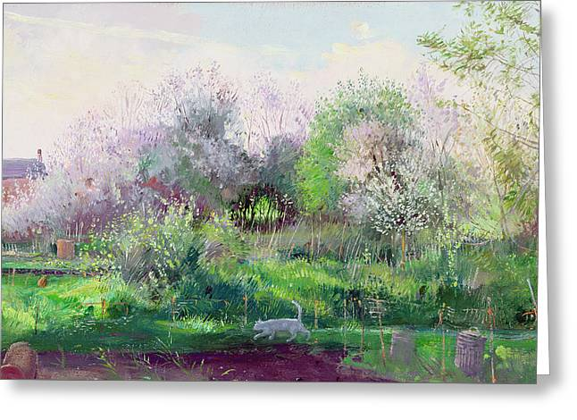 Purple House Greeting Cards - Allotment Stalker Greeting Card by Timothy Easton