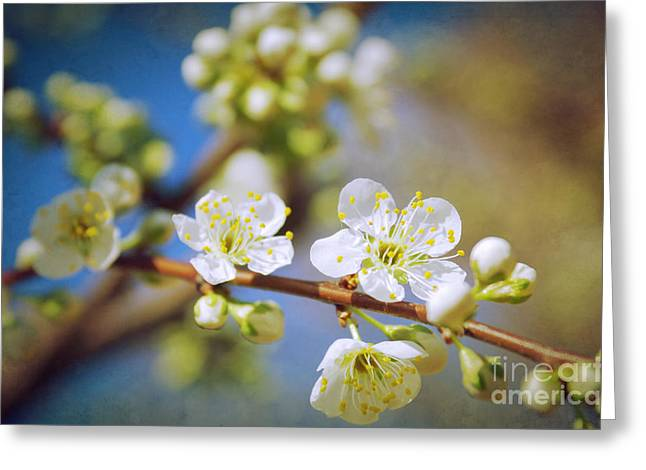 Japanese Landscape Greeting Cards - Almond Tree Branch Greeting Card by Carlos Caetano