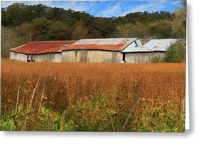 Tennessee Barn Greeting Cards - Almost Autumn Greeting Card by Benanne Stiens