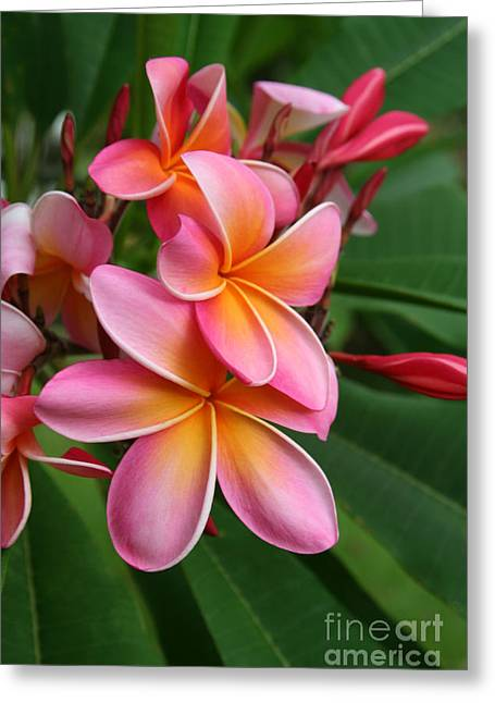 Lei Greeting Cards - Aloha Lei Pua Melia Keanae Greeting Card by Sharon Mau