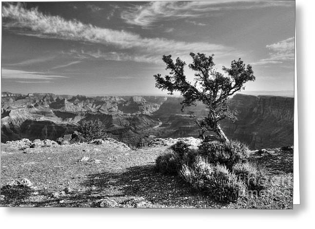 Alone At The Top Bw Greeting Card by Mel Steinhauer