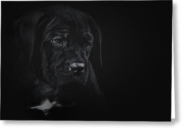 Puppies Photographs Greeting Cards - Alone Greeting Card by Ekaterina Solodilova