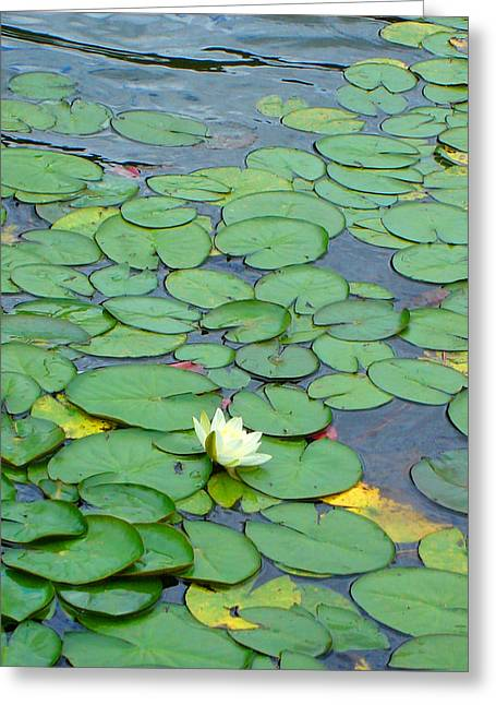 Water Lilly Greeting Cards - Alone Greeting Card by Roberto Alamino