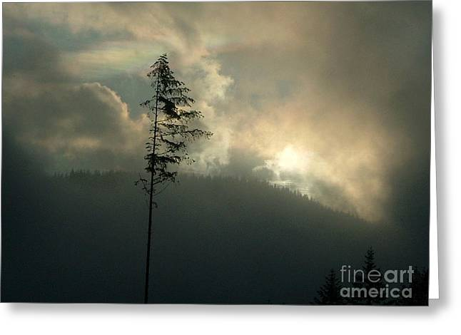 Independance Greeting Cards - Alone  Greeting Card by Terri Thompson