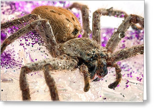 Creepy Crawly Greeting Cards - Along came a Spider Greeting Card by Tim Nichols
