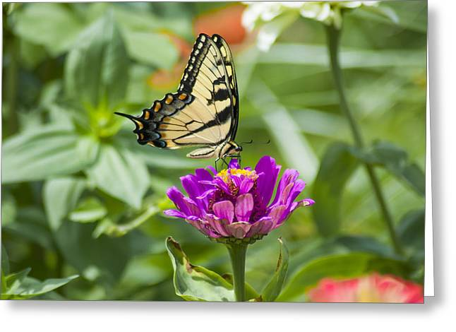 Along Came The Butterfly Greeting Card by Bill Cannon