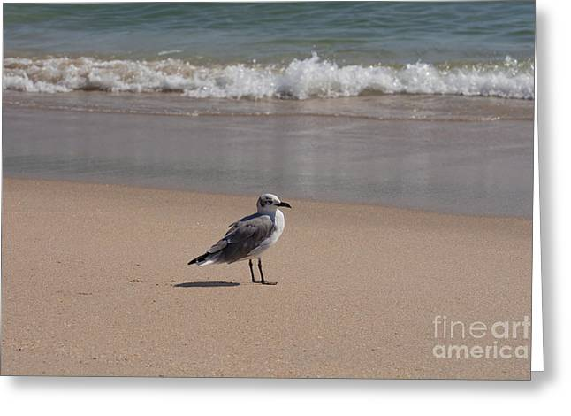 Along On The Beach Greeting Card by Zina Stromberg