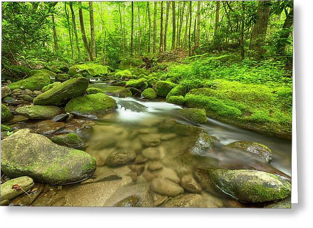 Along The Banks Of The Roaring Fork Greeting Card by Stephen Stookey