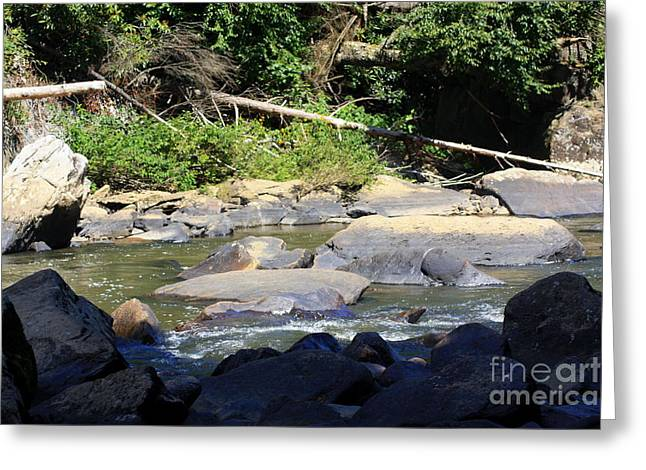The Plateaus Greeting Cards - Along the River Greeting Card by Patti Whitten