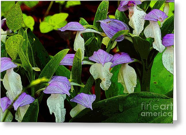 Orchis Greeting Cards - Along The Trails Edge Greeting Card by Michael Eingle