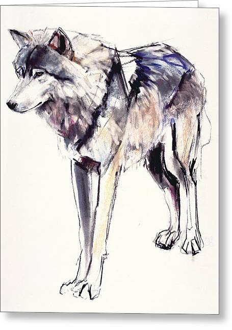 Wolf Portrait Greeting Cards - Alpha Greeting Card by Mark Adlington