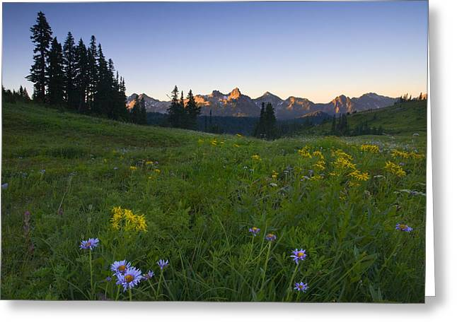 Aster Greeting Cards - Alpine Dawn Greeting Card by Mike  Dawson