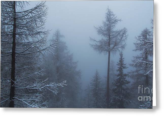 Swiss Photographs Greeting Cards - Alpine Forest Greeting Card by Omar Dakhane