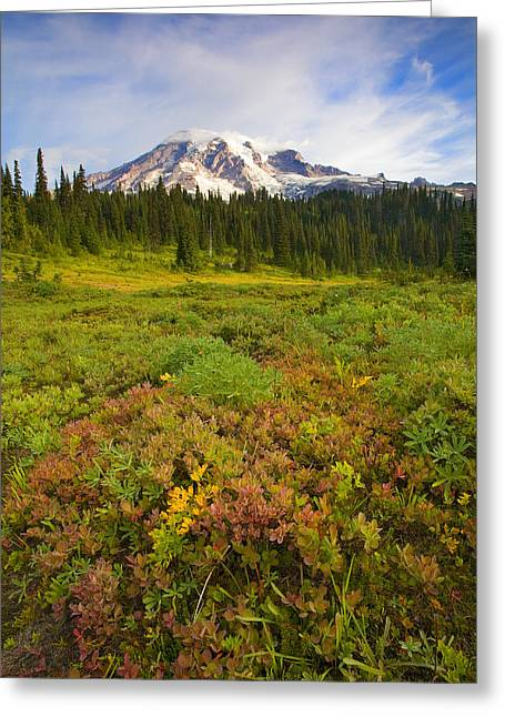 Mt Photographs Greeting Cards - Alpine Meadows Greeting Card by Mike  Dawson