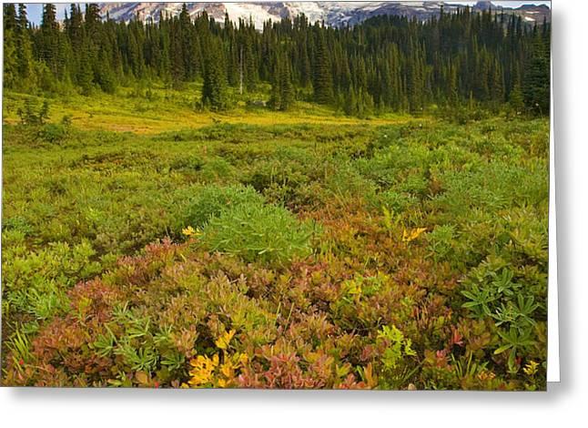 Alpine Meadows Greeting Card by Mike  Dawson