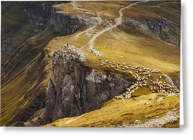 Alpine Pastures Greeting Card by Mihai Ian Nedelcu