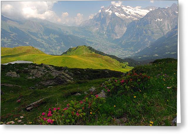 Alpine Roses In Foreground Greeting Card by Anne Keiser