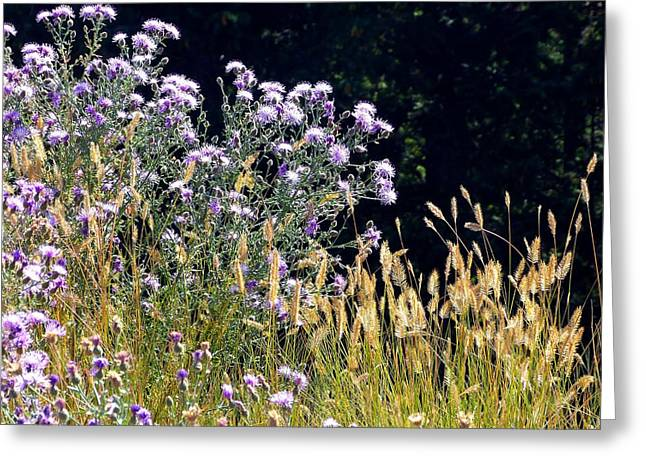 Alpine Thistles And Grasses Greeting Card by Will Borden