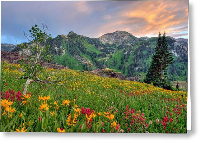 Serenity Scenes Landscapes Greeting Cards - Alta Wildflowers and Sunset Greeting Card by Brett Pelletier