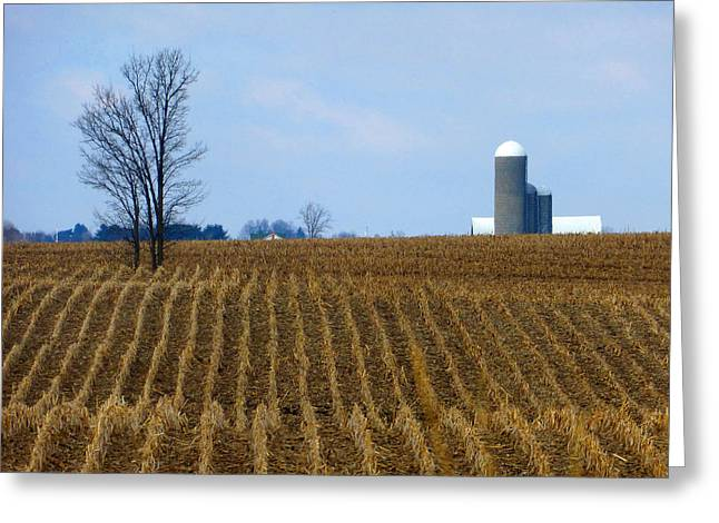 Lawn Chair Greeting Cards - Alternating Crop Rows Greeting Card by Tina M Wenger