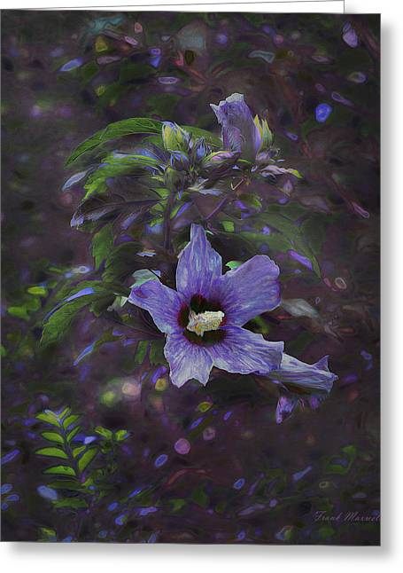 Althea Photographs Greeting Cards - Happy Althea Greeting Card by Frank Maxwell