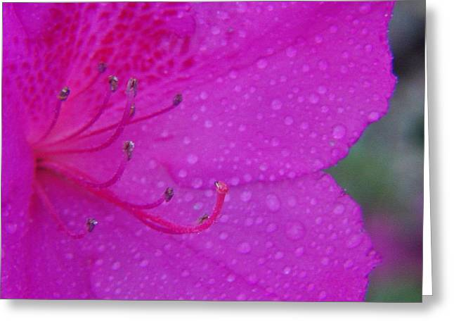 Althea Greeting Card by Priscilla Richardson