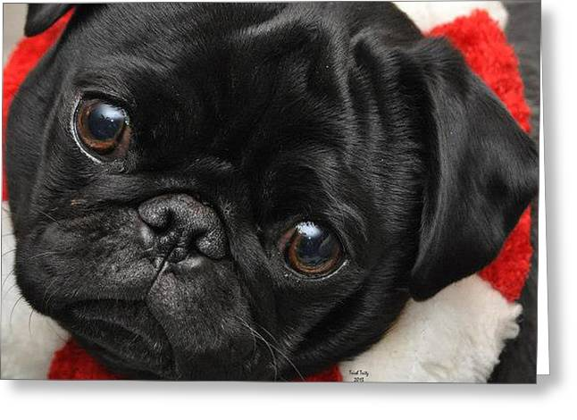Doggies Photographs Greeting Cards - Alvin Greeting Card by Trish Tritz