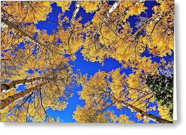 Fall Colors Greeting Cards - Always Look Up Greeting Card by Richard Cheski
