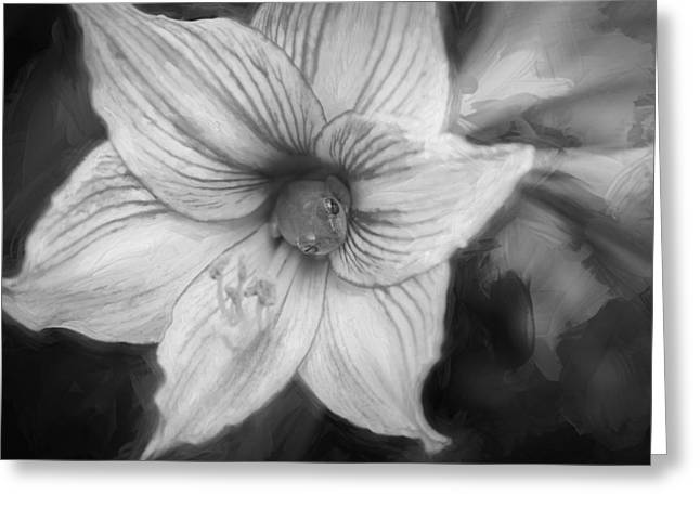 Leaf Peepers Greeting Cards - Amaryllis and Tree Frog Painted BW Greeting Card by Rich Franco
