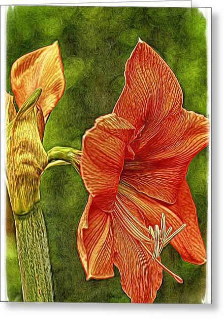 Amaryllis Art Greeting Card by Geraldine Scull