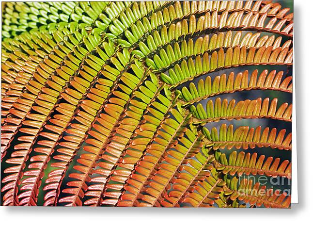 Amaumau Fern Frond Greeting Card by Greg Vaughn - Printscapes