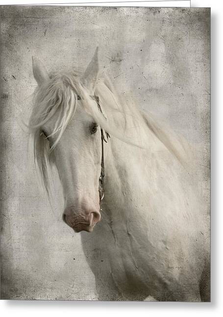 Gray Horse Greeting Cards - Amazing Grace Greeting Card by Dorota Kudyba