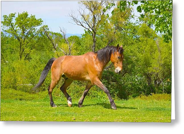 Jansson Greeting Cards - Amazing Rescue Horse Greeting Card by Maria Jansson