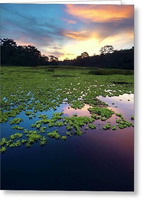 Mangrove Forest Greeting Cards - Amazon Rainforest Peru South America  Greeting Card by Eduardo Huelin