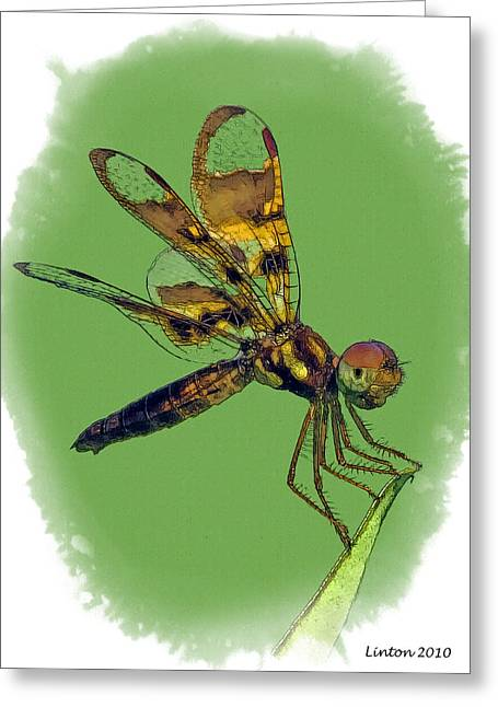 Amberwing Greeting Cards - Amberwing Greeting Card by Larry Linton