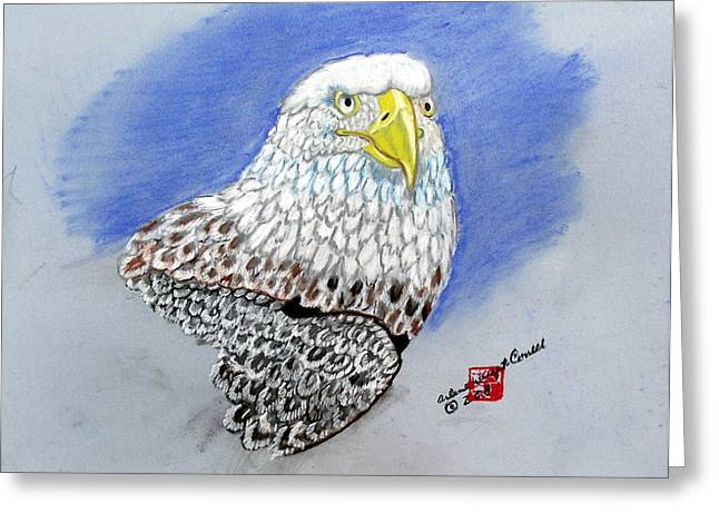 Bald Eagle Pastels Greeting Cards - American Bald Eagle Greeting Card by Arlene  Wright-Correll