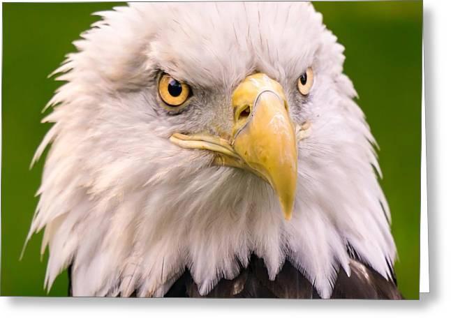 American Bald Eagle  Greeting Card by Jim Hughes