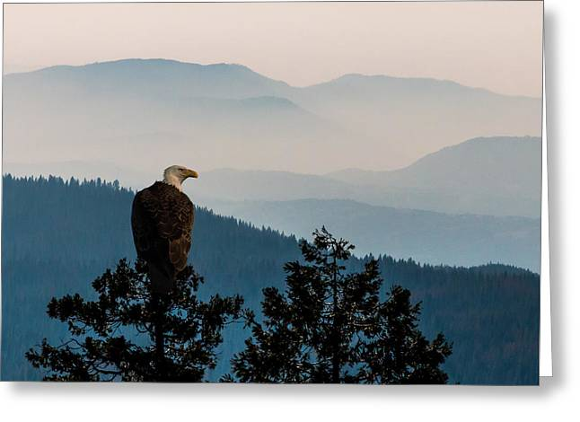 Haze Greeting Cards - American Bald Eagle Sentinel Greeting Card by Patti Deters