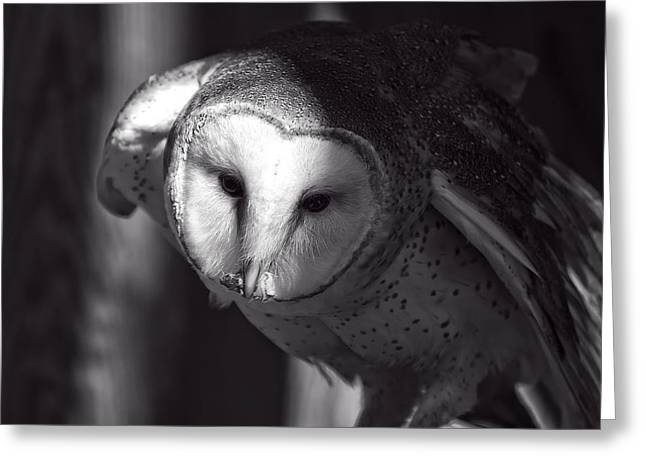 Owl Picture Greeting Cards - American Barn Owl Monochrome Greeting Card by Chris Flees