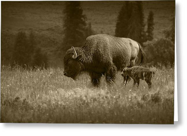 Wyoming Wildlife Greeting Cards - American Buffalo Bison Mother and Calf in Sepia Tone Greeting Card by Randall Nyhof