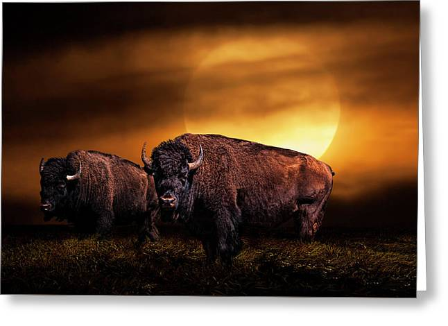 American Buffalo Under A Super Moon Greeting Card by Randall Nyhof