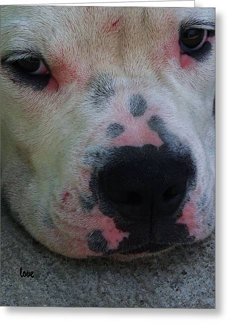 Dogs Digital Greeting Cards -  I Fought  With the Cat Greeting Card by Miss Pet Sitter Maria