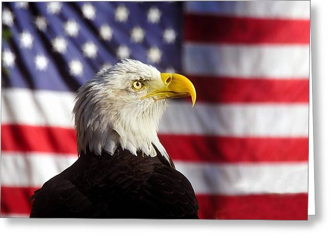 Bird Photography Greeting Cards - American Eagle Greeting Card by David Lee Thompson