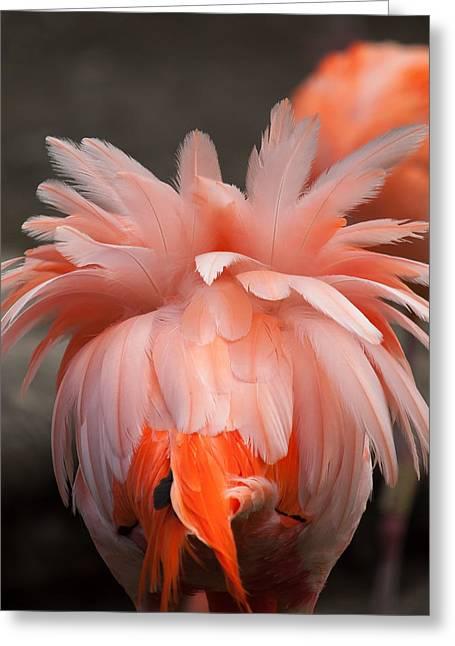 American Flamingo Greeting Card by Francisco Herrera