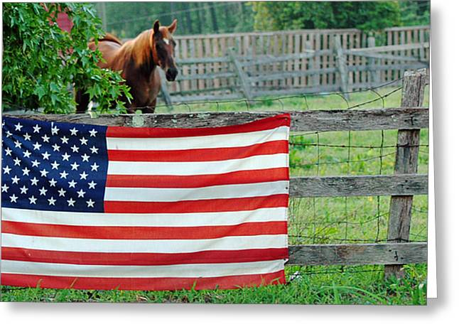 American Horse Greeting Card by Anahi DeCanio