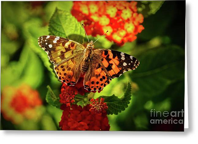 American Painted Lady Greeting Card by Robert Bales